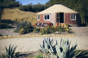 Cactus yurt